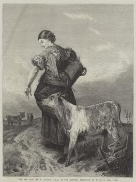 The Pet Calf by Richard Ansdell