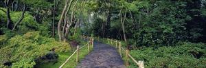 Tea Garden Walkway, San Francisco Botanical Gardens by Richard Berenholtz