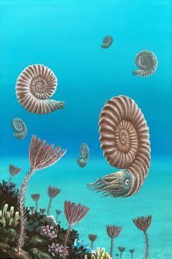 Ammonites In a Jurassic Sea by Richard Bizley