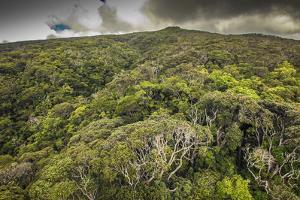 Aerial over Ohia Forest Canopy, Kamakou Preserve of Nature Conservancy, Molokai, Hawaii by Richard Cooke III