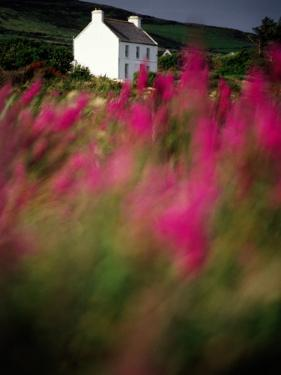 A Farmhouse Through the Wildflowers of Waterville in County Kerr by Richard Cummins