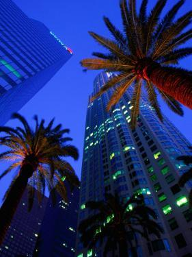 Citibank Center and Palm Trees from Below, Los Angeles, United States of America by Richard Cummins