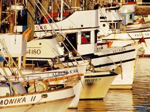 Fishing Fleet, Fishermans Wharf, San Francisco, United States of America by Richard Cummins