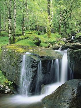 Gougane Barra Forest Park Waterfall by Richard Cummins