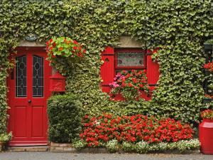 Ivy Covered Cottage, Town of Borris, County Carlow, Leinster, Republic of Ireland, Europe by Richard Cummins