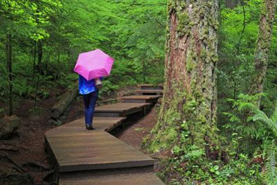 Lynn Canyon Park, Vancouver, British Columbia, Canada, North America by Richard Cummins