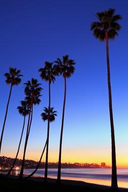 Palm trees, La Jolla Shores Beach, La Jolla, San Diego, California, United States of America, North by Richard Cummins