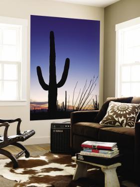 Saguaro Cactus in Tucson Mountain Park by Richard Cummins