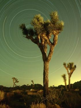 Star Trails and Joshua Trees by Richard Cummins