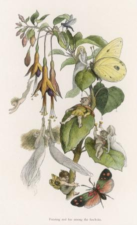 Feasting and Fun Among the Fuchsias, Fairies and Elves are Visited by Butterflies by Richard Doyle