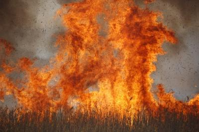 Inferno in Reedbeds, South Africa