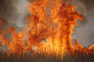 Inferno in Reedbeds, South Africa by Richard Du Toit