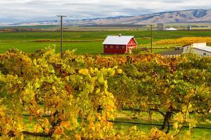 Autumn in Walla Walla Wine Country, Walla Walla, Washington, USA by Richard Duval