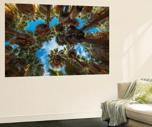 California Fan Palm, Thousand Palms, California, USA by Richard Duval