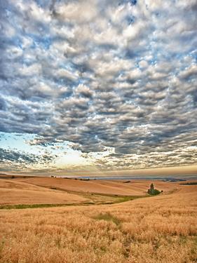 Dawn Breaks on Wheat Field, Walla Walla, Washington, USA by Richard Duval