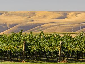 Goose Ridge Vineyards and Estate Winery, Richland, Washington, USA by Richard Duval