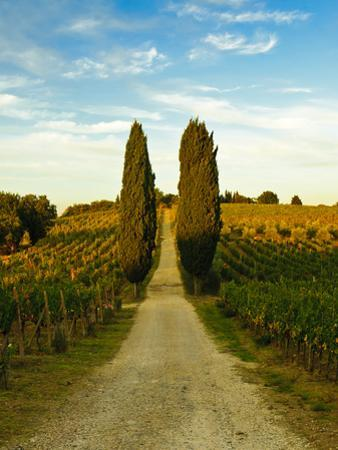 Late Summer Wine Scene in the Hills of Panzano, Tuscany, Italy by Richard Duval