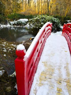 New Year's Day in Asian Garden, Mill Creek, Snohomish County, Washington, Usa by Richard Duval