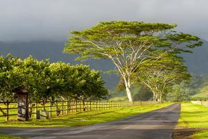 Old and New Trees in the Moloa'A Forest Reserve, Kauai, Hawaii, USA by Richard Duval