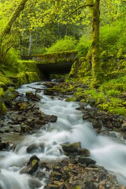Oregon, Wahkeena Falls. Located Along I-84, the Columbia River Gorge by Richard Duval