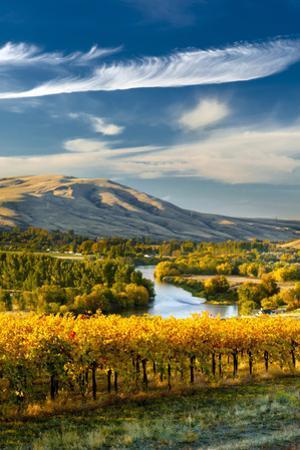USA, Washington. Harvest Season for Red Mountain Vineyards by Richard Duval