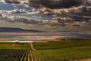 USA, Washington, Pasco. Vineyard in Eastern Washington by Richard Duval