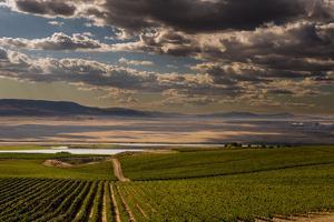 USA, Washington, Pasco. Vineyard in Eastern Washington by Richard Duval