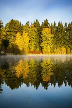 USA, Washington State, Cle Elum. Fall color by a pond in Central Washington. by Richard Duval