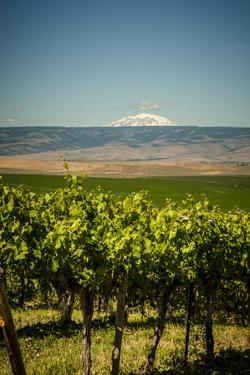 USA, Washington State, Yakima Valley. by Richard Duval
