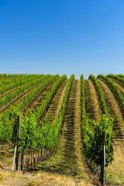 USA, Washington, Walla Walla. Vineyard in Walla Walla Wine Country by Richard Duval