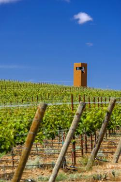 USA, Washington, Yakima Valley. Col Solare Winery and Vineyard by Richard Duval