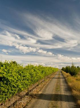 Vineyard and Road, Walla Walla, Washington, USA by Richard Duval
