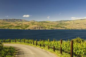 Vineyard in the Lake Chelan AVA, Washington, USA by Richard Duval