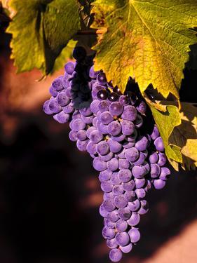 Walla Walla Wine Country, Walla Walla, Washington, USA by Richard Duval