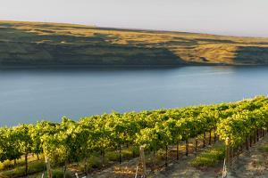 Washington State, Tri-Cities. the Benches Vineyards by Richard Duval