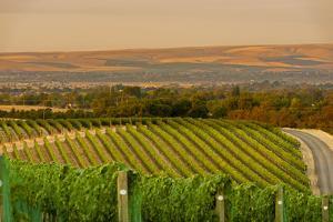 Washington State, Walla Walla. Dusk on a Vineyard by Richard Duval