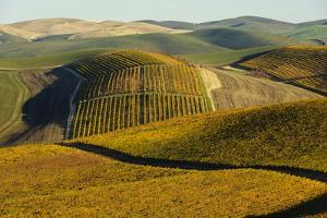 Washington State, Walla Walla. Spring Valley and Vineyards by Richard Duval