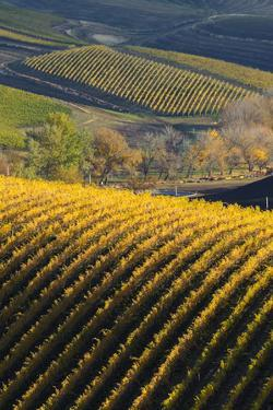 Washington State, Walla Walla. Spring Valley and Vineyards by Richard Duval