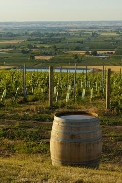 Washington State, Walla Walla. Vineyard Overlooking the Valley by Richard Duval