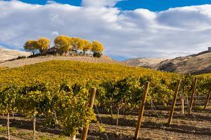 Washington State, Yakima Valley. Vineyard and Winery in Yakima Valley by Richard Duval