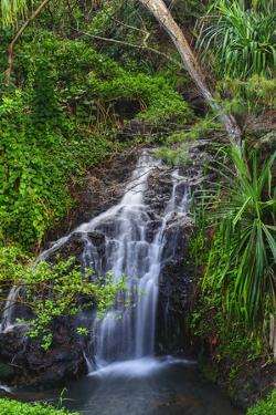 Waterfall Along the Trail to Queens Bath, Lihue, Kauai, Hawaii, USA by Richard Duval