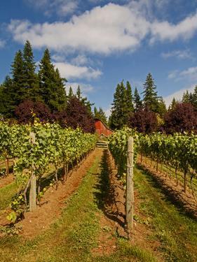 Winery and Vineyard on Whidbey Island, Washington, USA by Richard Duval
