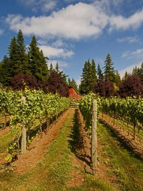 Winery and Vineyard on Whidbey Island, Washington, USA by Richard Duval