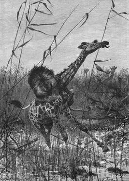 Lion Attacks Giraffe by Richard Friese