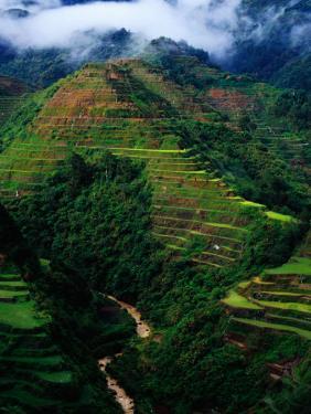 Rice Terraces Around Banaue, Banaue, Philippines by Richard I'Anson