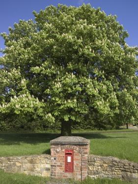 GR Royal Mail Rural Letter Box by Richard Klune
