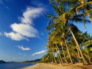 Palm Trees on Palm Cove Beach by Richard l'Anson