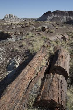 Petrified Logs from the Late Triassic Period by Richard Maschmeyer