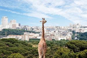 City Giraffe by Richard Newstead