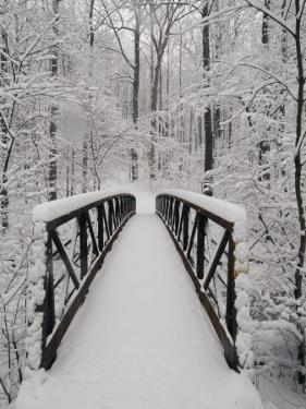 A View of a Snow-Covered Bridge in the Woods by Richard Nowitz